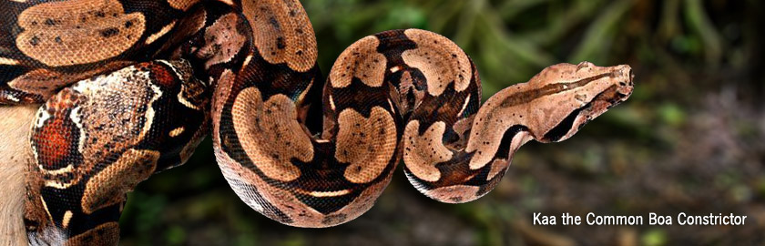 Animal and Reptile shows for kids birthday parties and